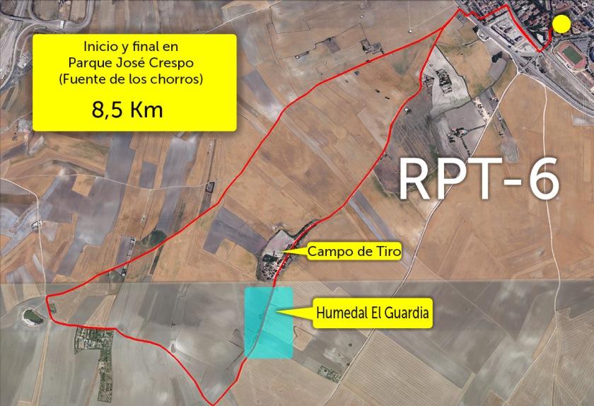 RPT-6